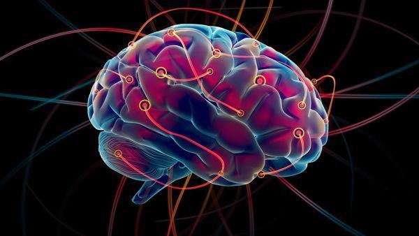 cerebro conector
