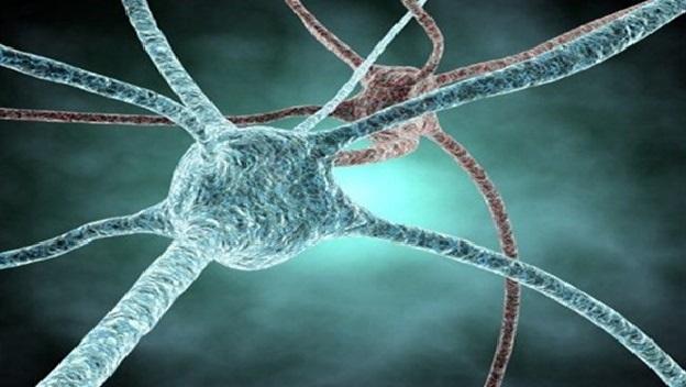 cerebro neuroncolor